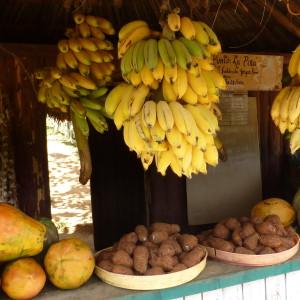 Fresh juice stop in Western Cuba