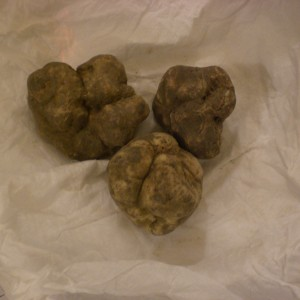the best white truffles from Alba, N.W. Italy
